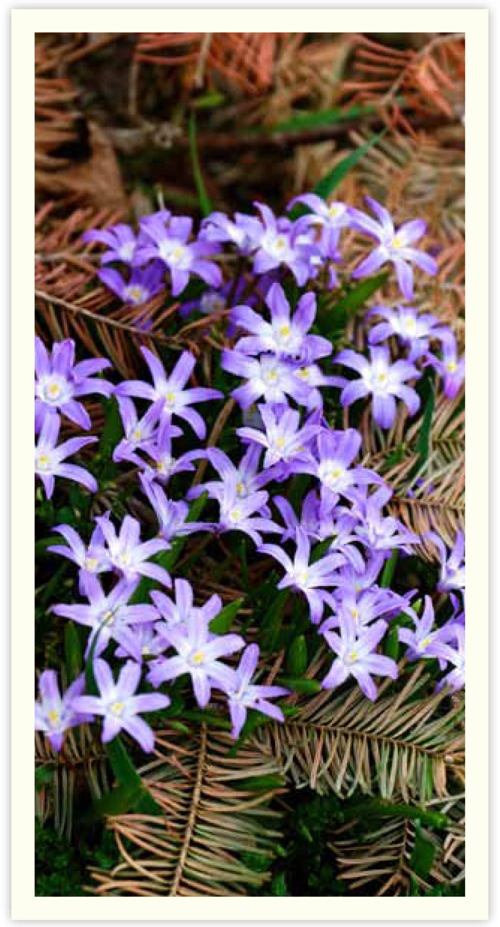 MLH spring things